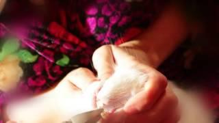 Как подстричь зубы кролику дома - малокклюзия.
