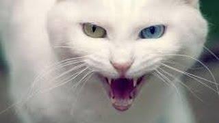Самые няшные фото кошек