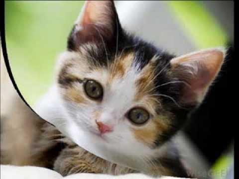 кошки не похожи на людей - слушать мп3 музыку онлайн
