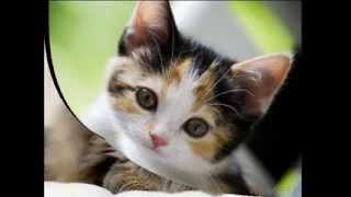 Кошки не похожи на людей, Жанна Агузарова