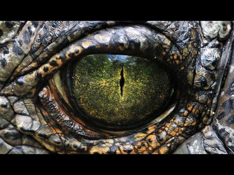 ดูหนังเก่าหนังสนุกหนังดี หนังจระเข้กินคน ตัวใหญ่ยักษ์ มหึมา