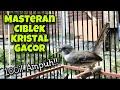 Burung Masteran Ciblek Kristal Gacor Ngotot Bikin Ciblek Paud Bahan Macet Bunyi Gacor Lagi  Mp3 - Mp4 Download