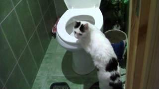 кошка в туалете