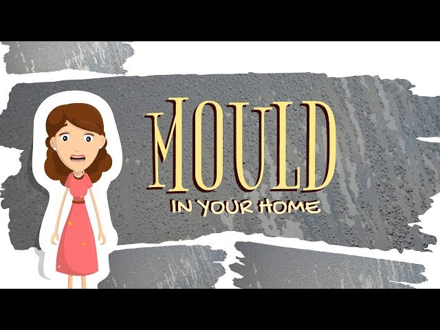Mould In Your Home