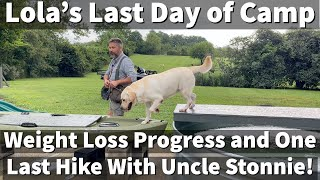 Labrador Retriever Training   Lola's Weight Loss Progress and One Last Hike With Uncle Stonnie