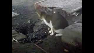 gokil ni kucing dkerjain sampai terbang