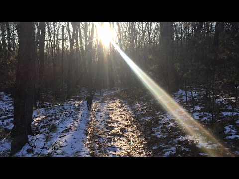Virtual Hike with Cadeaux - Marble Hill Conservation Area in Stow, MA - February