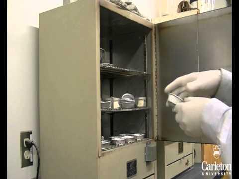 Carleton University - CIVE 3208 Lab 2: Atterberg Limits
