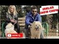 Beslenmesi Yasaklanmış 10 Köpek Irkı - YouTube