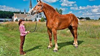 Самые невероятные лошади в мире