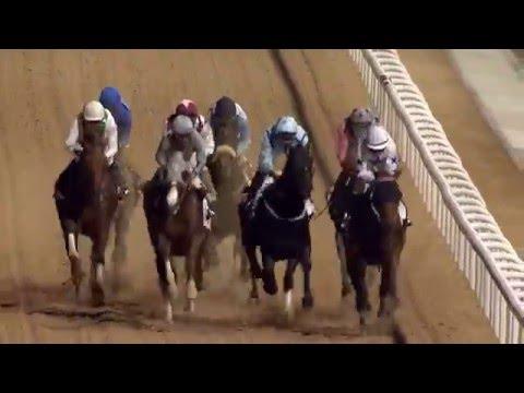 DWCC Meydan Racecourse 25-2-16, Race 6 Trans Gulf Electromechanical Trophy Handicap
