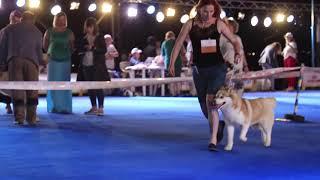 IDS Asia Winner 2019  Выставка собак  Азия Виннер  2019