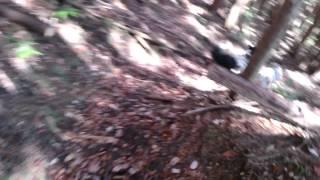山散歩シリーズ。 自然の中では本当に楽しそうにしますね。