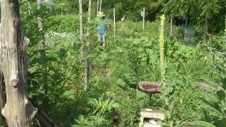 Backyard Garden Movie! Loads Of Ideas!