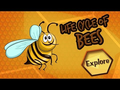 Pictures of life cycle of a bee