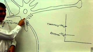 01 parts of the neuron with physiology 01.wmv