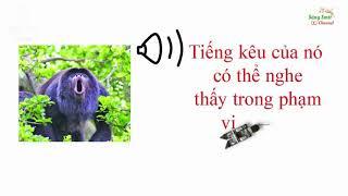 Kỷ lục guinness về thính giác của động vật