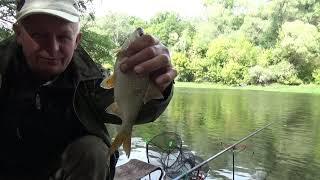 Осенняя рыбалка на реке болонкой Новое место отличный улов карась плотва