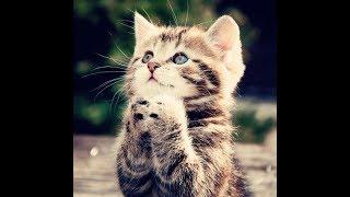 Самое милое видео про кошек и котят этого лета!
