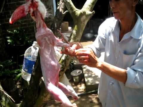 Làm thịt thỏ park 2