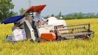 MÁY CẮT LÚA KUBOTA DC 60 LÊN CHÂN CHẠY ĐẤT LẦY máy gặt đập Liên Hợp dc