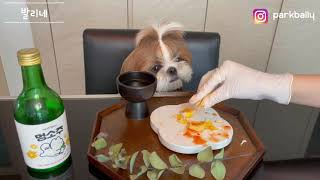 [발리네] 시츄 강아지 김치 보쌈 처음 먹어봤쥬~ 낮술…