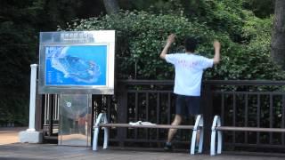 Free-Roaming In Open-World ~ Bon Voyage South Korea