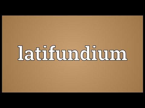 Header of latifundium