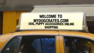 Dog Crates, Coach Dog Collar On Sale