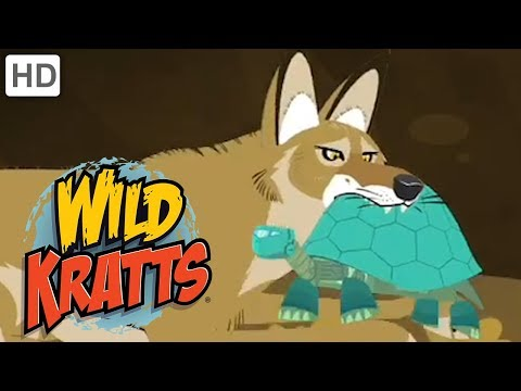 Wild Kratts - Best Season 4 Moments! (Part 5/6) | Kids Videos