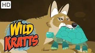 Wild Kratts - Best Season 4 Moments! (Part 5/6) | Kids Videos