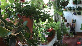 식물로베란다인테리어/옷걸이를활용한플랜테리어/식물과함께하…