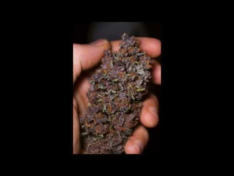 Black Cream, Red Poison, y Dark Devil. Marihuana autofloreciente de colores
