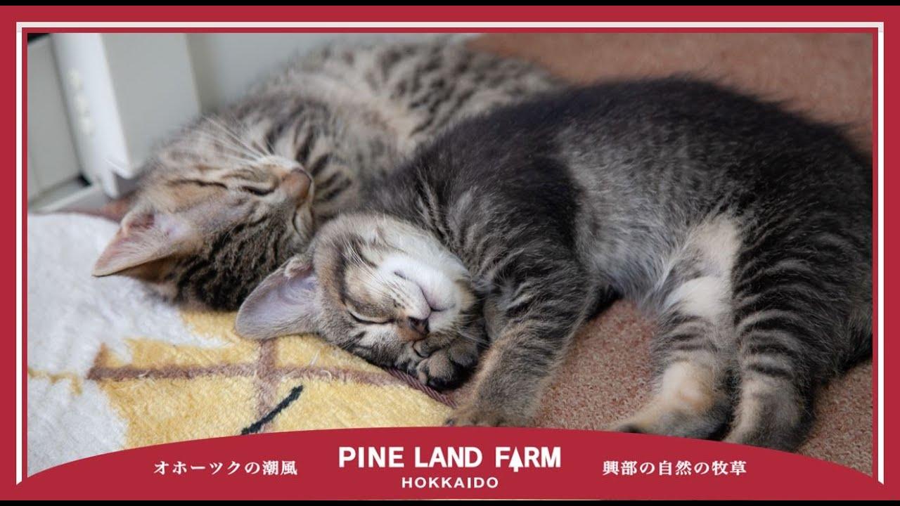 【番外編】事務所猫5匹の『眠い日』(あんちゃん/だいちゃん/みたらし/にっき/しなもん)