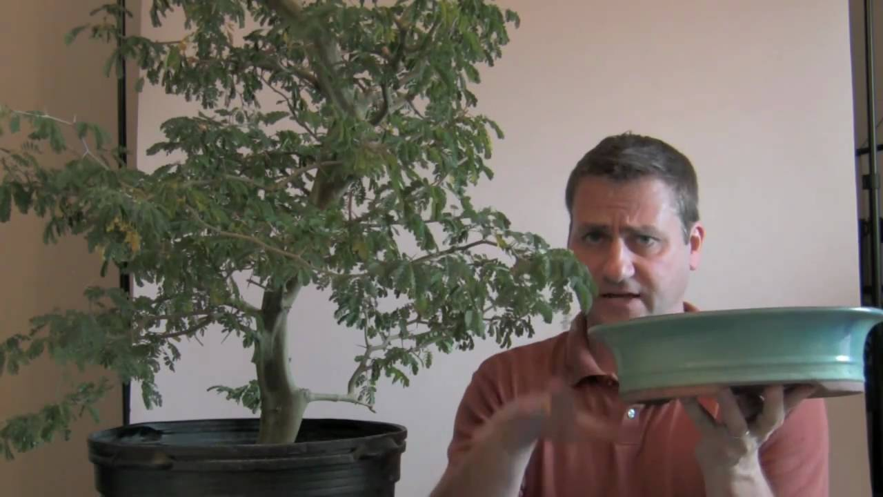 How To Bonsai Growing Nursery Pot To Bonsai Pot Youtube