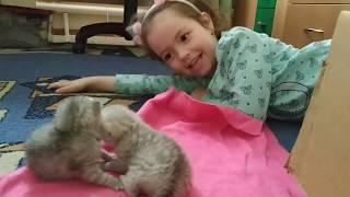 КОТЯТАМ 10 ДНЕЙ ИГРАЮТ С РЕБЕНКОМ 🐱 КОШКА МАМА 😻 МЯУКАНЬЕ  КОТЯТ 🐱 Meowing Kitten Cat КОТЫ И ДЕТИ