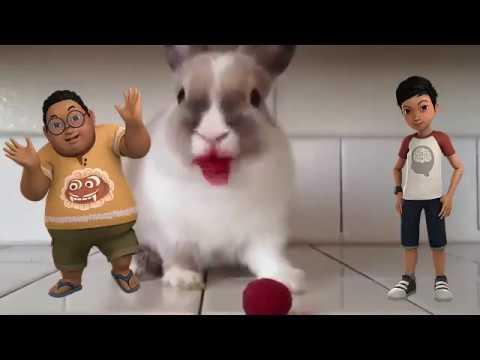 Kelinciku ✰ Adit Sopo Jarwo  ✰  Lagu Anak Indonesia Populer Sepanjang Masa