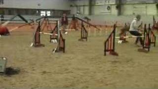 Dog Agility - Che - Wilmslow 08