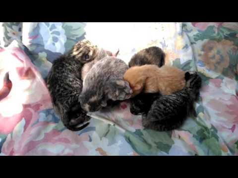 THE CAT BREEDER: THE ALL MUST GO!! AFTER 4 WEEKS!