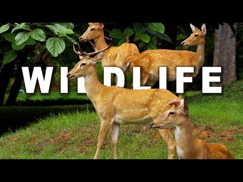 Wildlife In 4k Ultra Hd 60fps