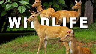 WILDLIFE IN 4K (ULTRA HD) 60fps(To view this video in 4K select