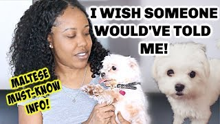 WATCH THIS BEFORE YOU ADOPT A MALTESE | THINGS NOBODY TOLD ME
