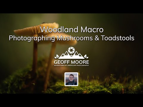 Woodland Macro Photography | Photographing Mushrooms & Toadstools | Geoff Moore Photography