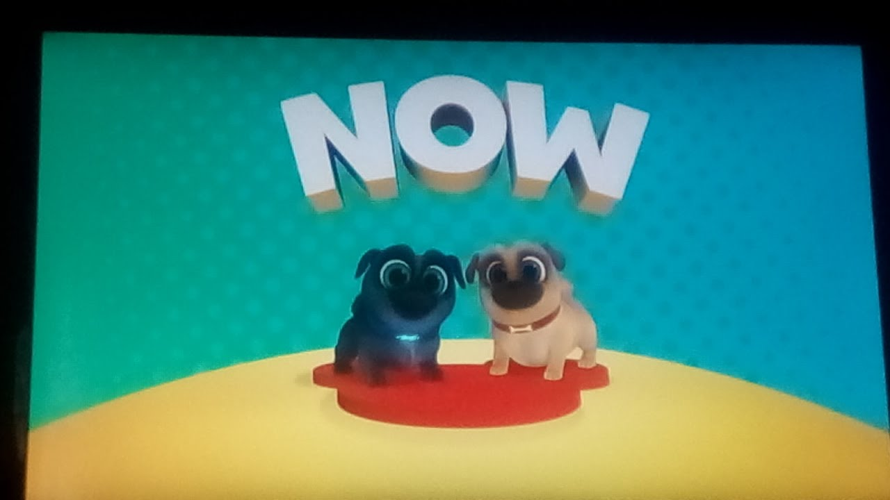 Bow To The Wow Now Puppy Dog Pals On Disney Junior MY MOST VIEWED VIDEO