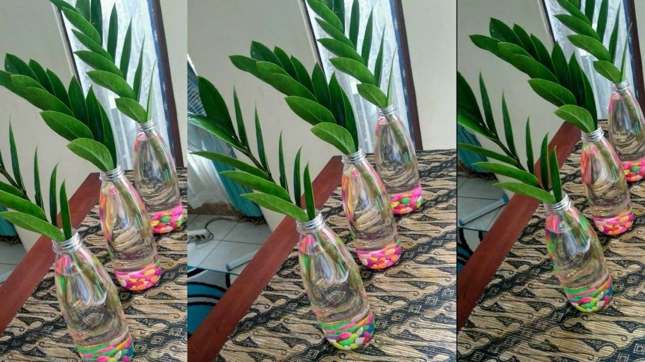 How to propagate zanzibar gem//Zz plant water propagation ...