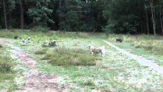 Bamske, Kari, Ronja en Nissa hebben plezier tijdens een wandeling i...