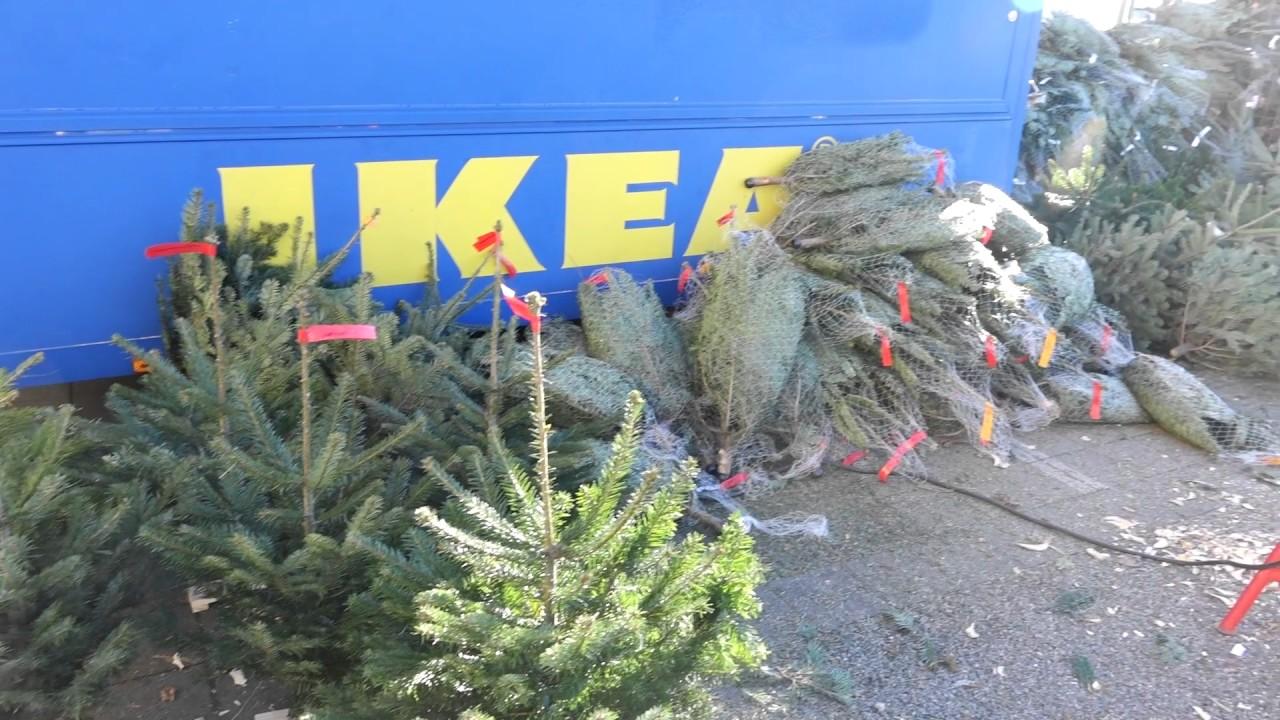Künstlicher Tannenbaum Ikea.Weihnachtsbaumverkauf Bei Ikea In Ulm