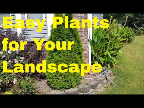 Super Easy Plants to Grow for Your...