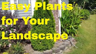 Gambar cover Super Easy Plants to Grow for Your Landscape