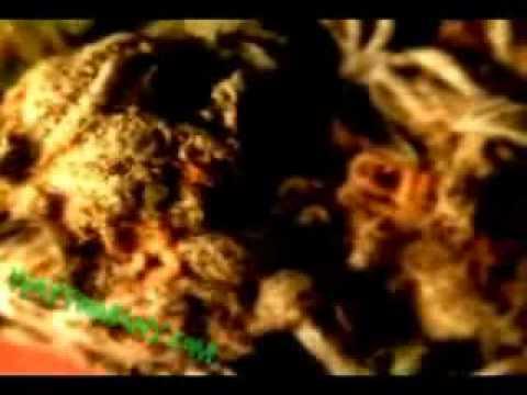 Way too many  - Weed Smoking Montage - Video.avi